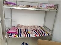 三张上下床低价出售,非常结实,有床板。原来连木板买成630,现在半价出售。