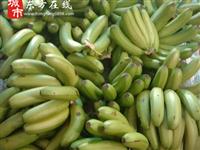 【东方在线精选】本地生香蕉,1.8元/斤,个大够老需要自己放熟~10斤起送~~