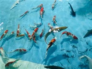 热烈祝贺黄河岸边大型热带鱼科普中心对外开放啦!
