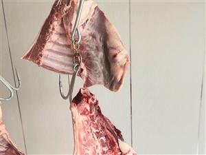 羊羔肉销售
