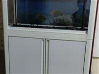 森森鱼缸,八成新,因搬家现低价出售,有意者电话联系!