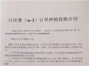 w_2大白葱订单种植收购