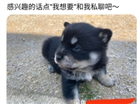一只小土狗幼犬,有想领养的联系我