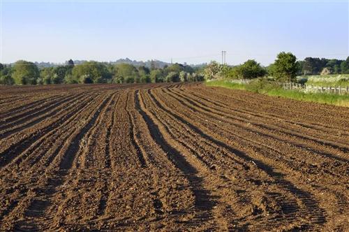 熟成地200亩,位于南岔村三组,现出租,有需要朋友联系