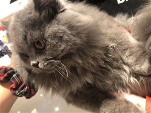自家猫猫生的小猫超级可爱图片是猫爸爸