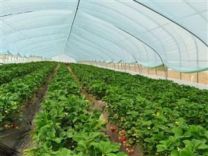 莓好时光,来摘草莓吧。