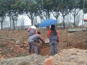 邹城:植树造林美化生态环境