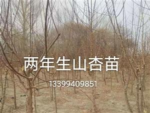 出售苗木、插穗