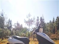 出售一辆踏板摩托,买了两个月,因为闲置不用所以出售,价格实惠,联系电话15393865464