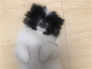 小奶狗4个月