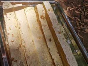 大地蜂业土蜂百花蜜