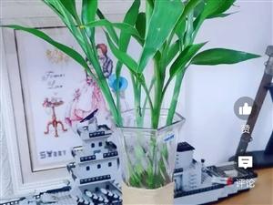 长期小量采购富贵竹