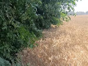 基本农田里面种树违法吗,去找那个部门投诉