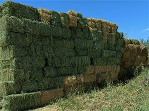 出售苜蓿草 。。麦草。。。芦花鸡。。。