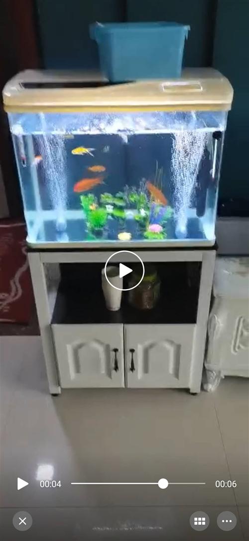 闲置,有两台生态鱼缸,包装打开安装,一泵三合,过滤,打氧,静音不用经常换水有需要的便宜出售,只限府谷...