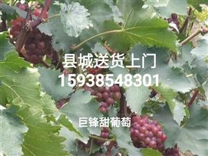 出售兩年掛果的葡萄樹