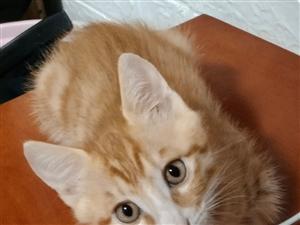 猫咪出手19936189963