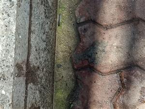 树上飘落毛毛虫遍地给市民造成伤害和困扰