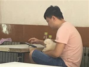 大三巴网站/宠物狗进店是不是应该制止了