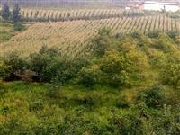 位于双河乡古柏村七组有土地急售,土地共20亩,玉米地十亩,花椒地十亩,价格面议