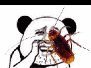 府谷除蟑螂灭老鼠