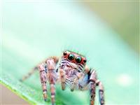 手机昆虫摄影爱好者
